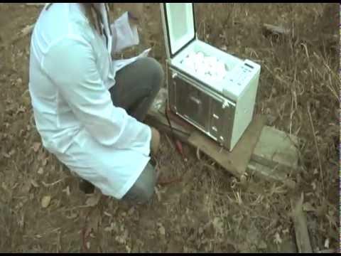 173個の卵を電子レンジに入れてチンすると……