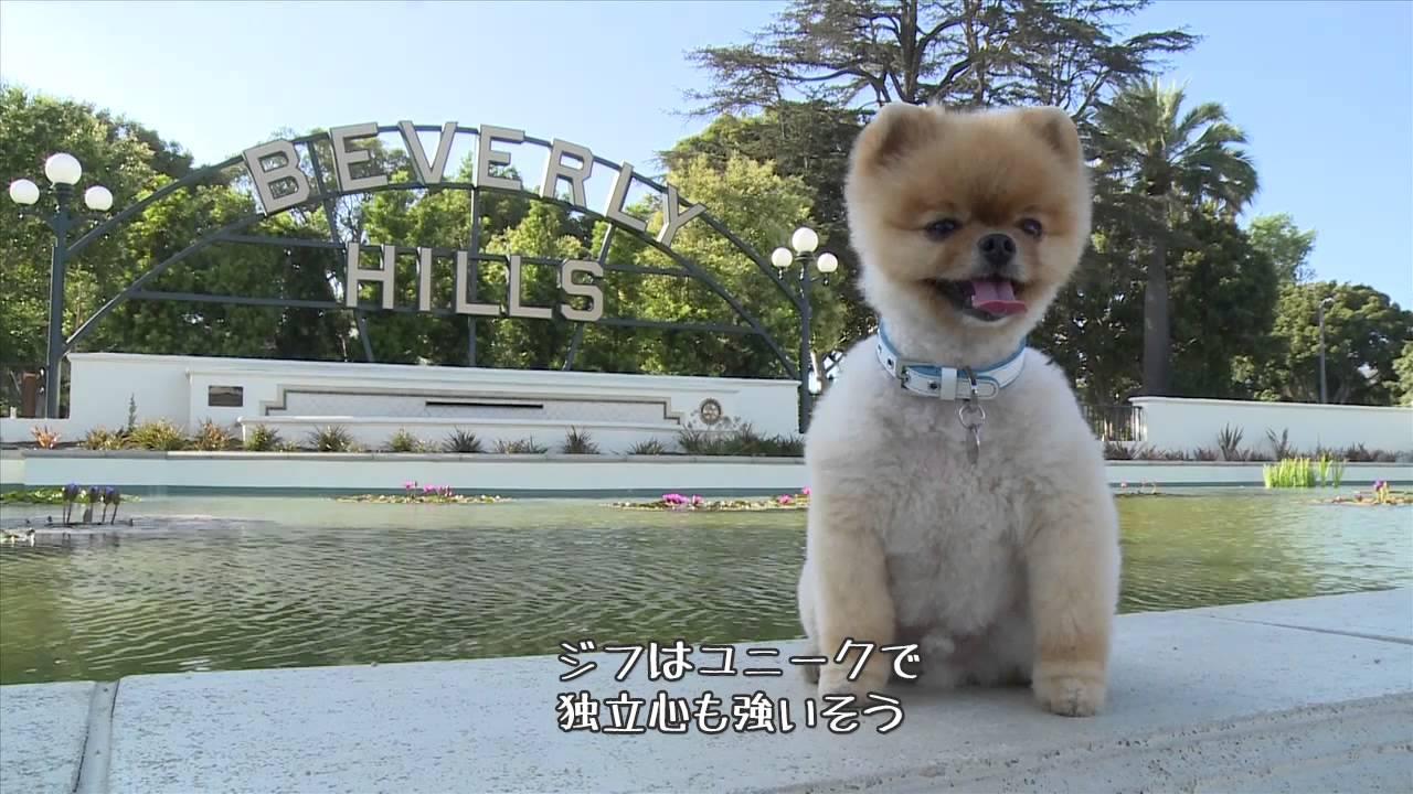 2足歩行の最速犬の映像、『ギネス世界記録 2015』 からの映像
