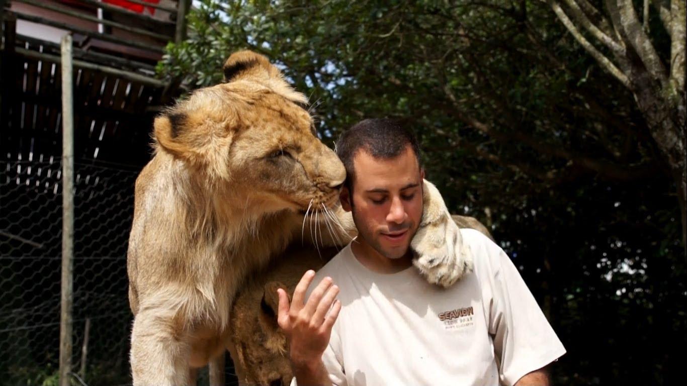 見ている方が冷や汗もの……2頭のライオンに懐かれまくる男性