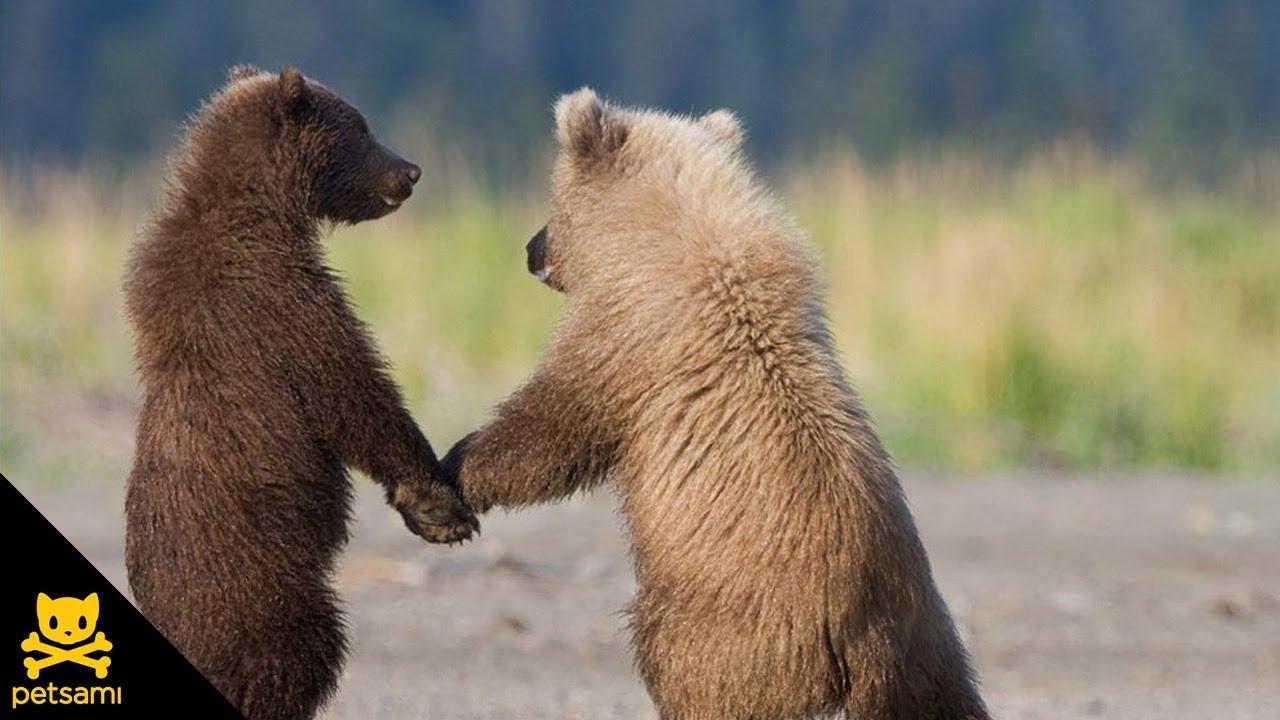 これは可愛い!次々と後ろに並んでいく小熊たち