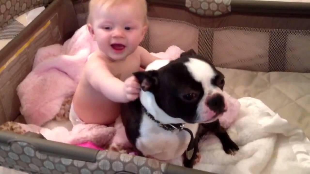 【癒し動画】ボストンテリアが大好きな赤ちゃん