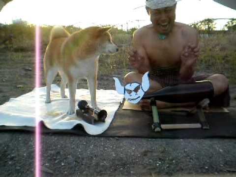 絶妙な表情が面白い。飼い主に仕方なく付き合う柴犬動画2