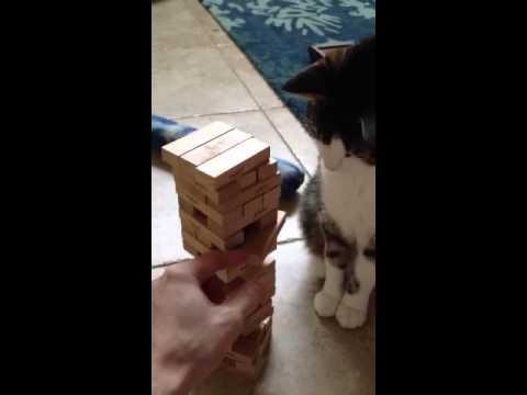 飼い主とジェンガ勝負をする猫が可愛い