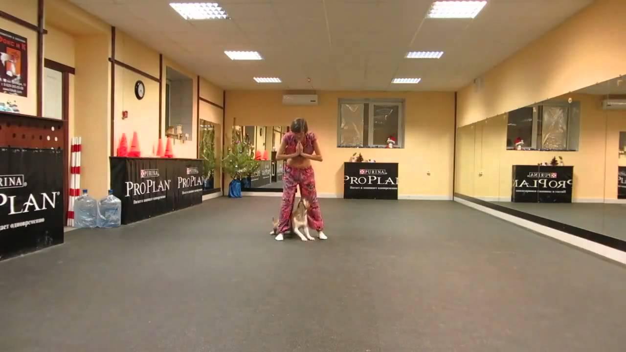 飼い主と一緒にベリーダンスを踊るわんちゃん