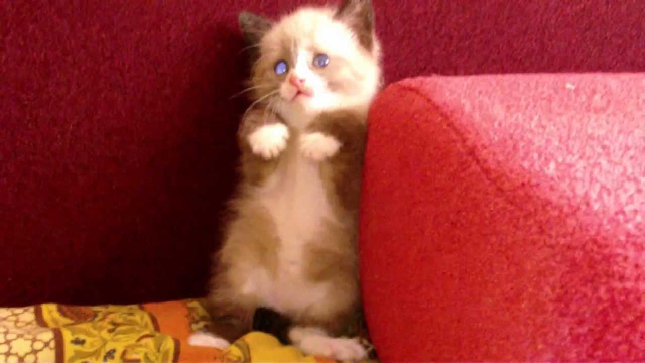 掃除機を怖がる猫の表情がやばい