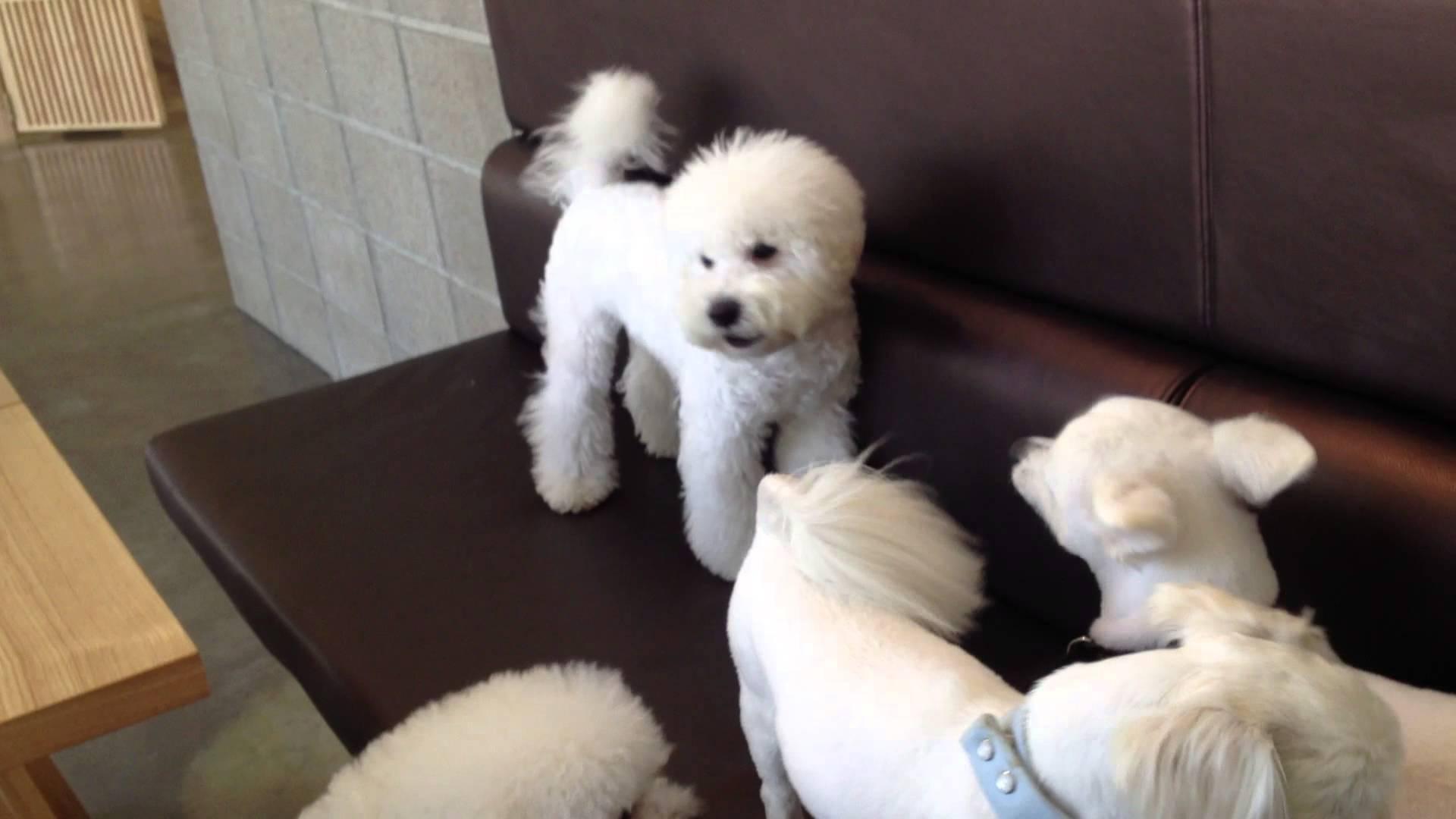 犬同士のケンカを一声で仲裁する犬が格好いい