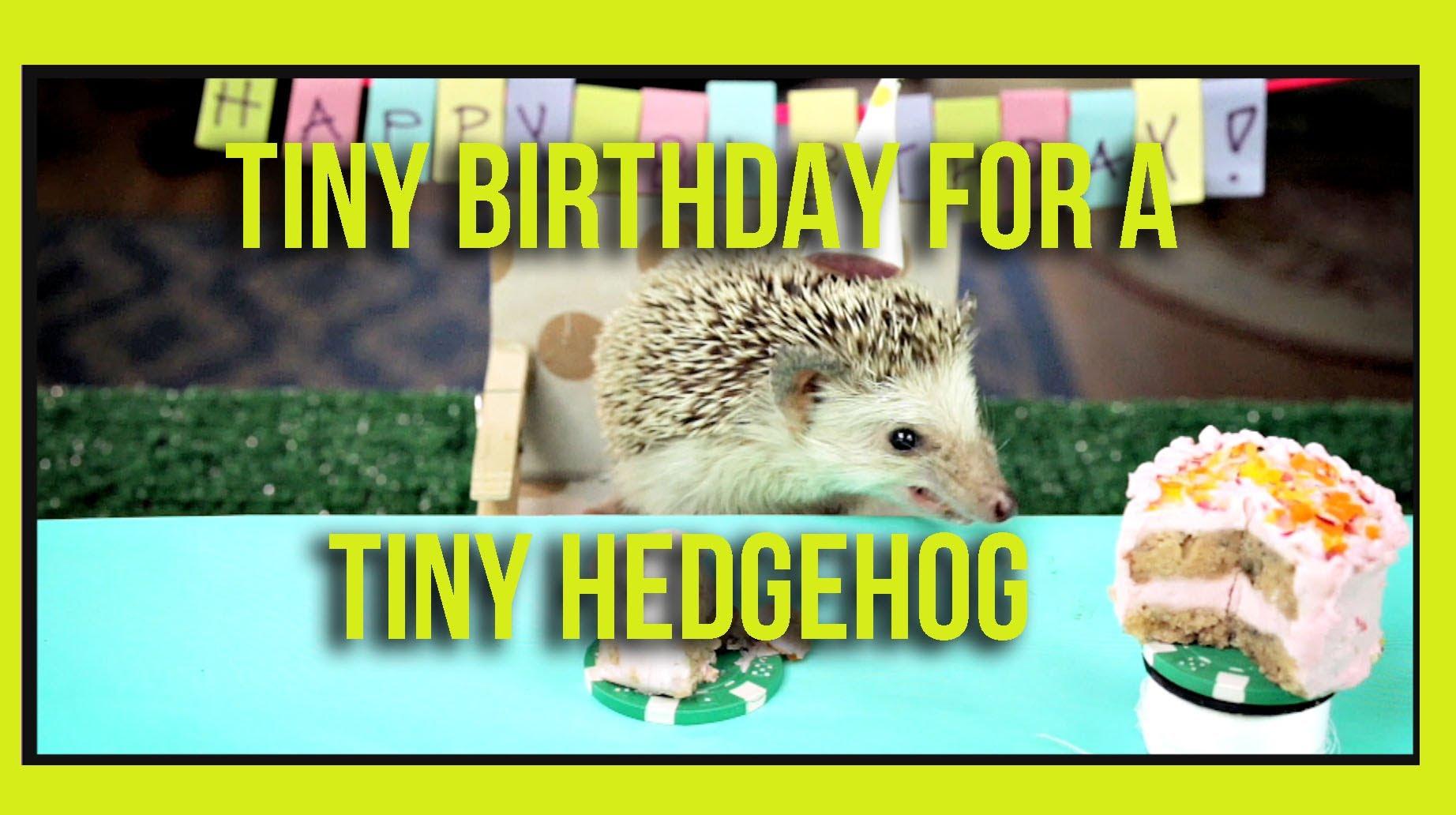 ハリネズミの誕生日パーティがほほえましい動画