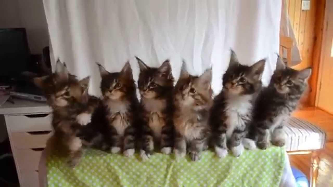7匹の子猫によるシンクロ動画が萌え死にそう