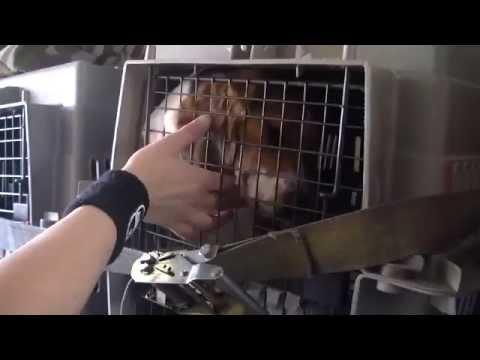 動物実験を行われていたビーグルを動物保護団体が救出する、感動と少し考えさせられる物語。