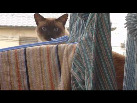 【猫動画】猫、ダイブ失敗・・・
