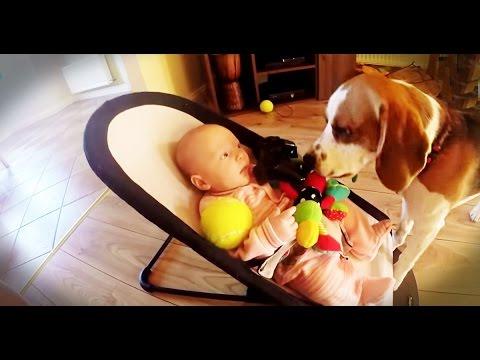 赤ちゃんを泣かせてしまったビーグルが驚きの慰め方をする動画