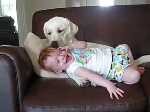 子守上手なラブラドールレトリバーの動画