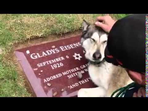 飼い主の墓前で咽び泣く犬の動画
