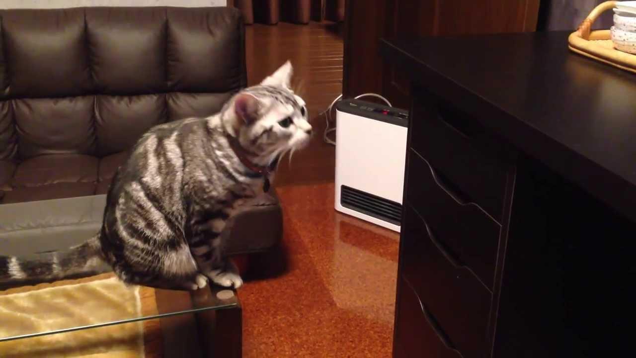 おやつの入った引出しを開けようと奮闘する猫動画