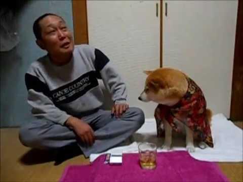 柴犬が織り成す自棄酒コント動画