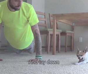 飼い主と一緒にヨガをするチワワの動画