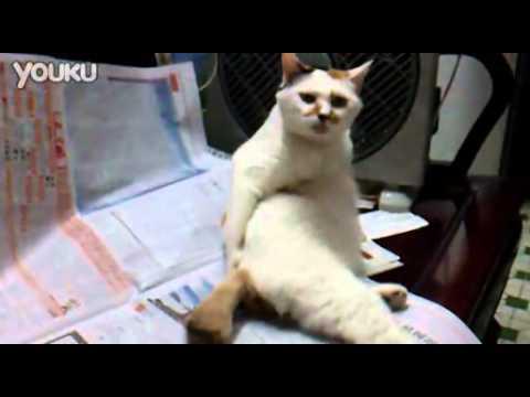 テレビを見ながら手でお尻をかくおっさんみたいな猫動画