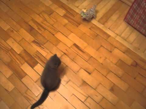 プロレスラー顔負けのドロップキックを繰り出す猫