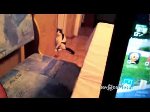 「だるまさんが転んだ」で最速の猫動画
