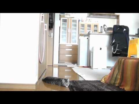 高速シュートを止める天才子猫ゴールキーパー動画