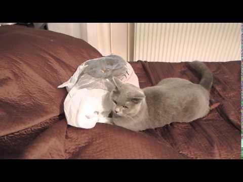 あまりの驚きに飛び跳ねる猫が可愛い動画