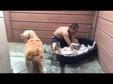 お風呂に入れられてヘブン状態の犬動画
