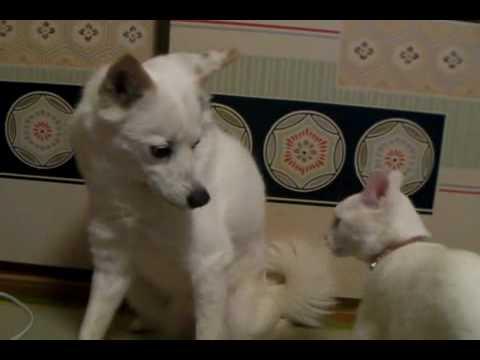 猫の抱きつき攻撃を受け止める犬の動画