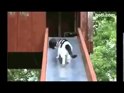 滑り台で子猫の世話をする親猫の様子が微笑ましい動画