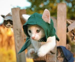 アサシンクリードに扮した猫が超絶可愛い