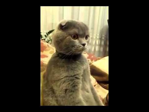 行儀の良すぎる猫の動画がシュール