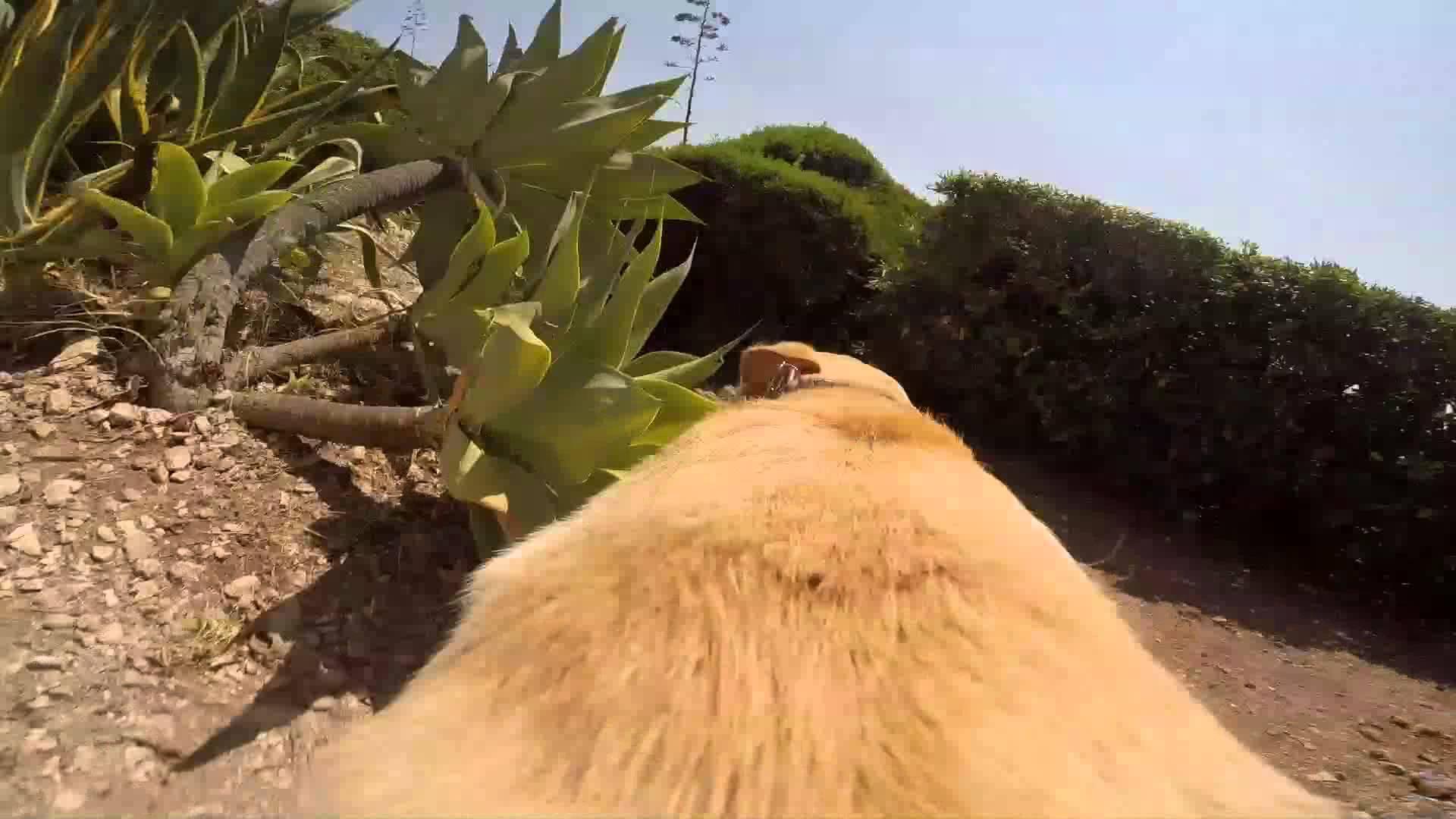 「もう待てない!」感が凄い、犬視点の動画