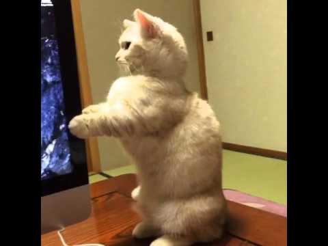 気持ちは分からなくもない、CDドライブの動きにビクッとする猫