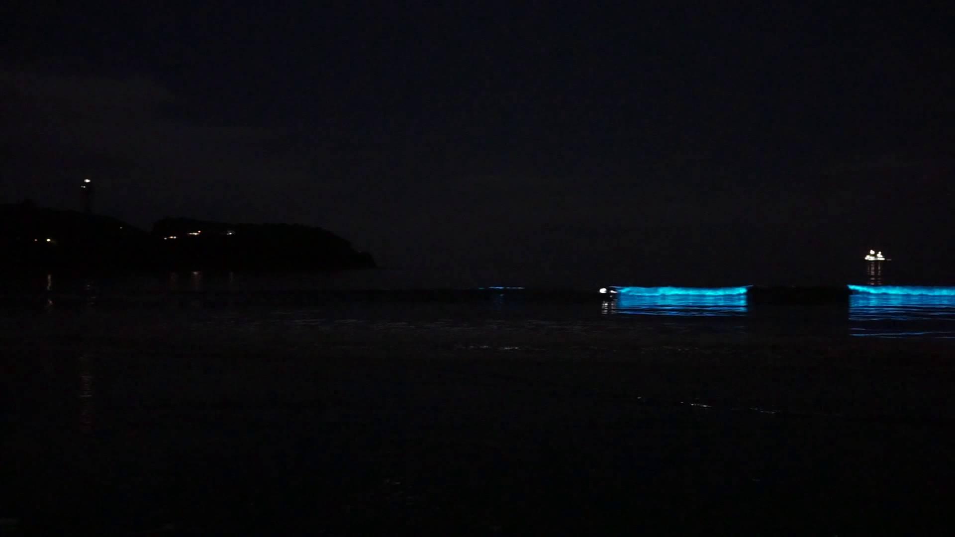 CGっぽいけどCGじゃない、夜の海を照らす夜光虫