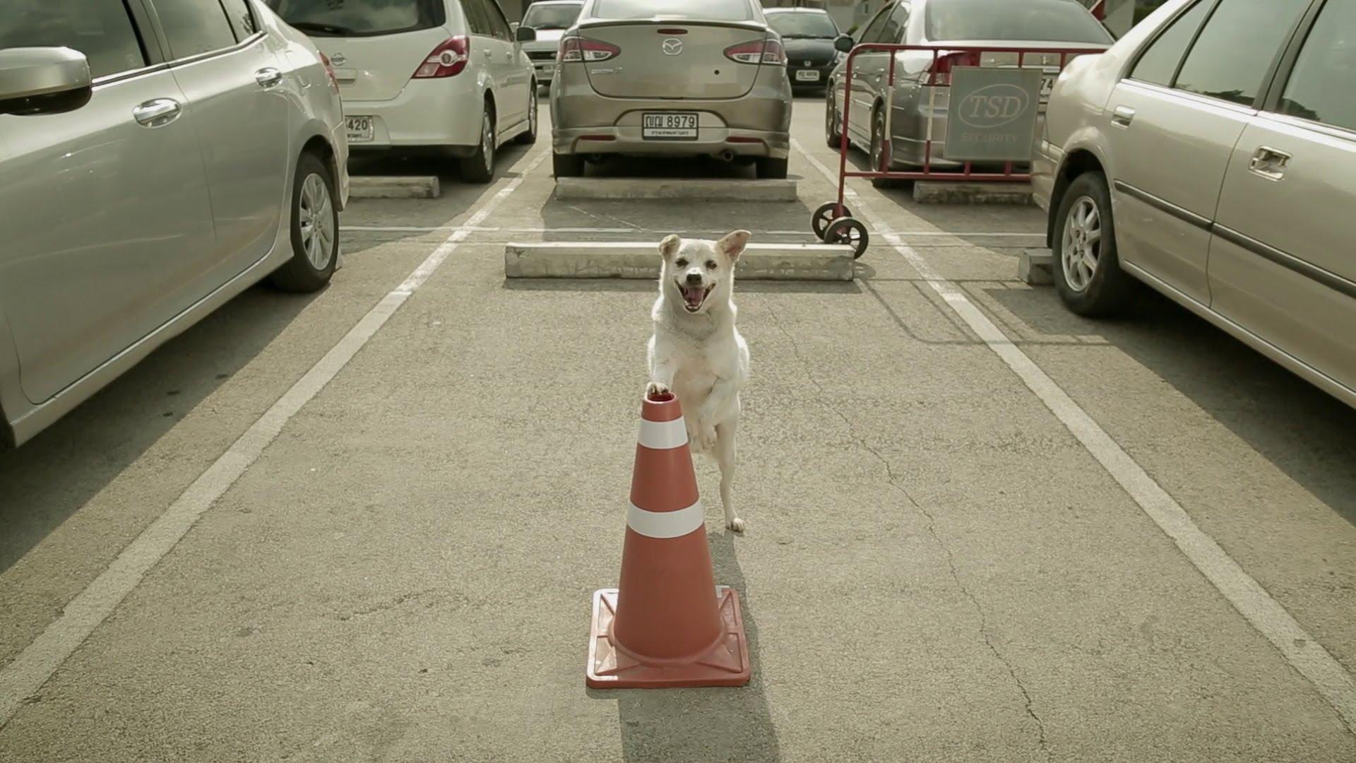鶴の恩返しならぬ犬の恩返し? タイのCMが面白い