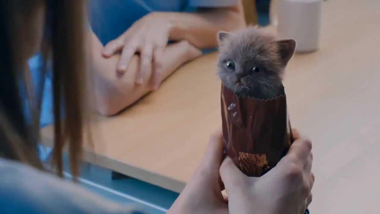 ビスケットのCMに出演する子猫集団が萌えすぎる!