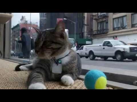 【海外の反応】NYにできた猫カフェに大行列