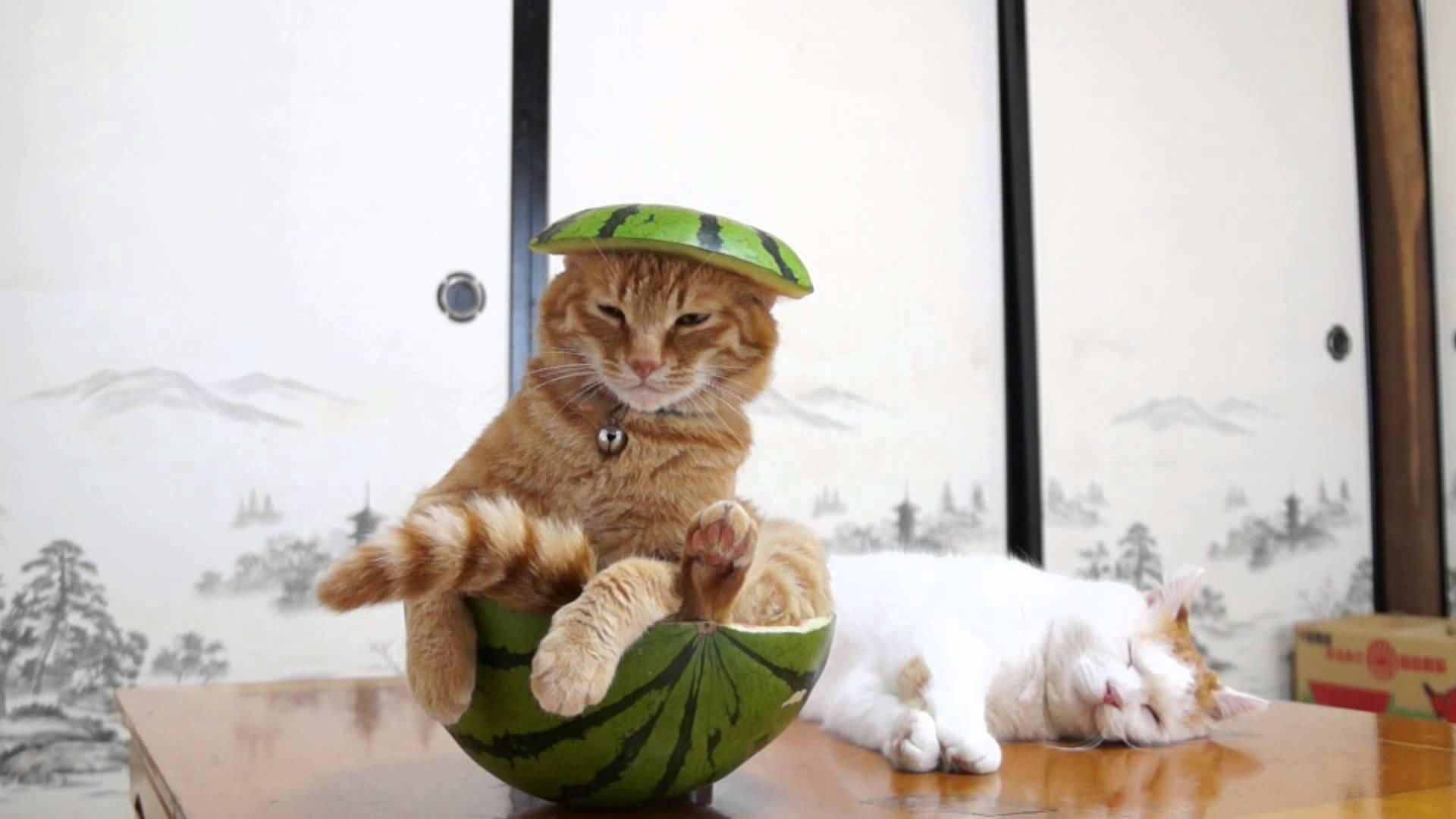 くりぬいたスイカの中でくつろぐサザエさんのオープニング的な猫