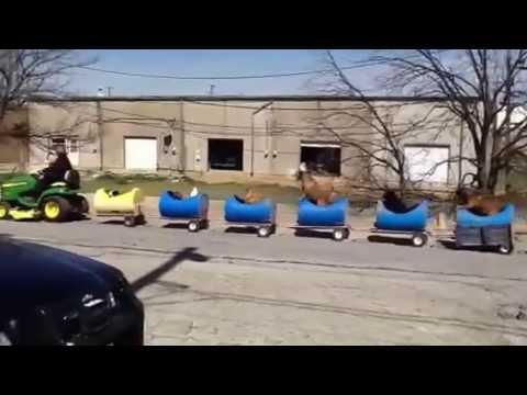 わんちゃん専用列車が可愛すぎる動画