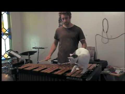 木琴を練習したい飼い主VS頑なに邪魔する猫