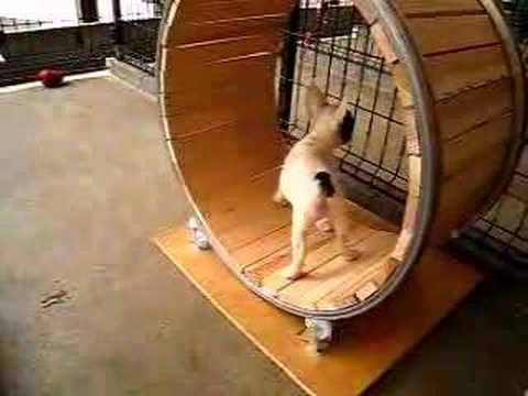 犬用にハムスターの回し車を作ったらどうなるか