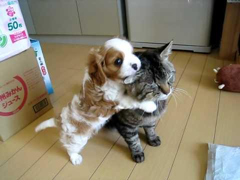 猫大好きな子犬VS鬱陶しそうな猫が可愛すぎ!