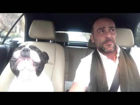 飼い主がドライブ中に歌うとそれに併せて吠えるブルドッグ