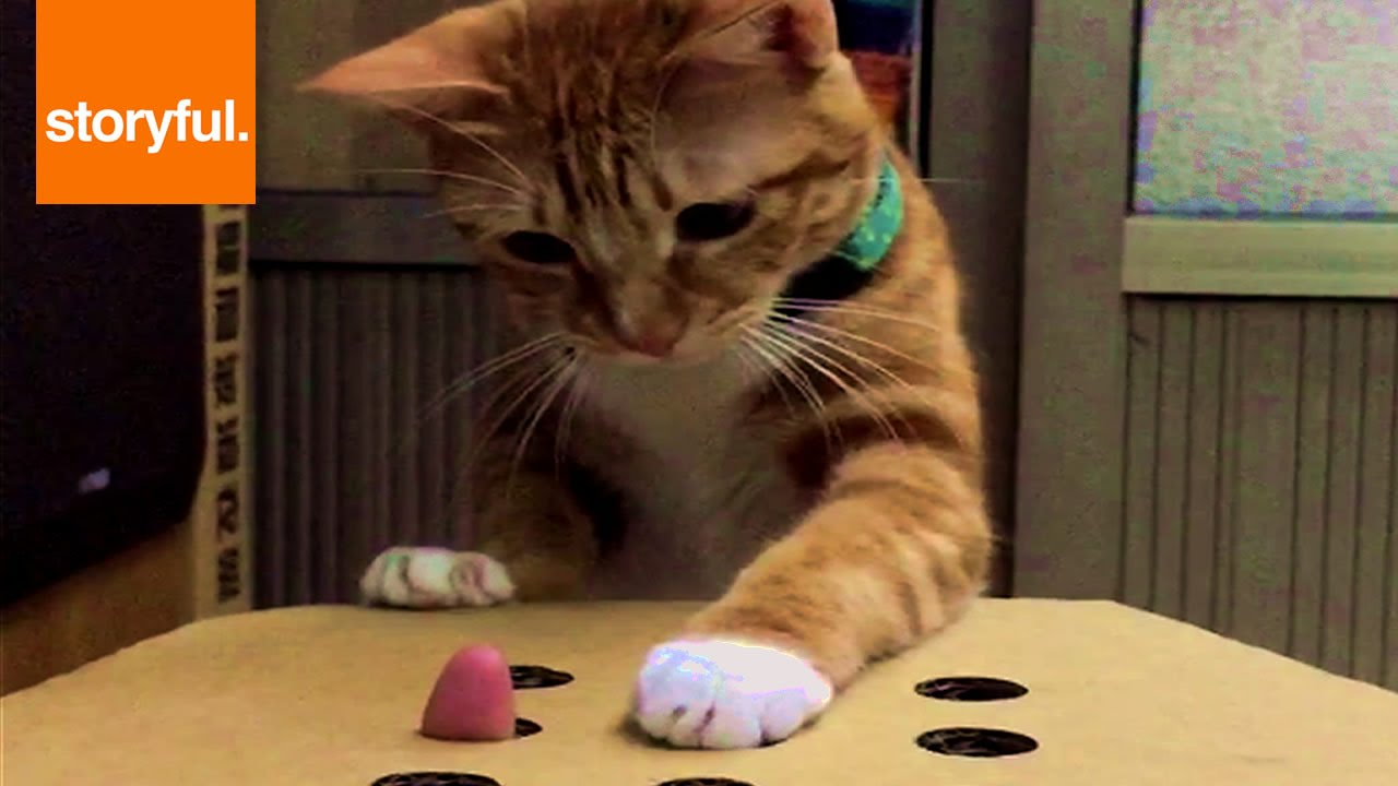 人力もぐら叩きに夢中になる猫がキュート!