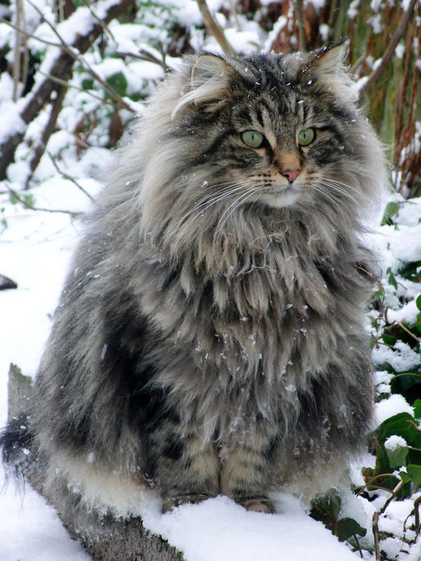 fluffy-cats-funny-animal-pics-102__605
