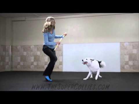 阿吽の呼吸! 犬と飼い主の息の合ったダンス