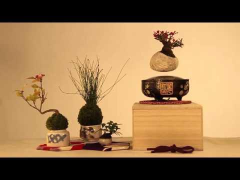 インテリアに最適、宙に浮く盆栽「Air Bonsai」