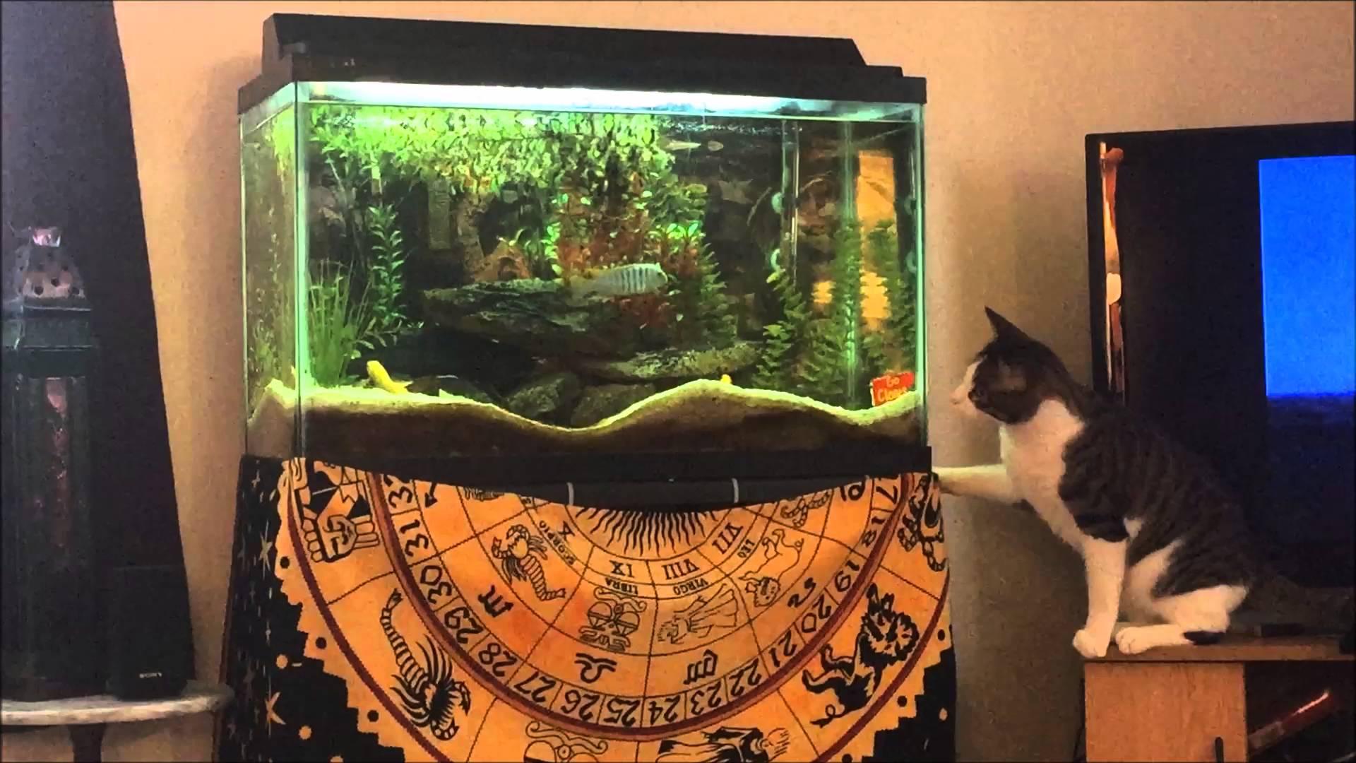 水槽の中を泳ぐ熱帯魚を捕まえようとしたネコの衝撃行動