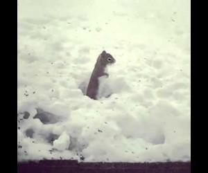 何コレ激萌え! 雪の上で高速足踏みするリス