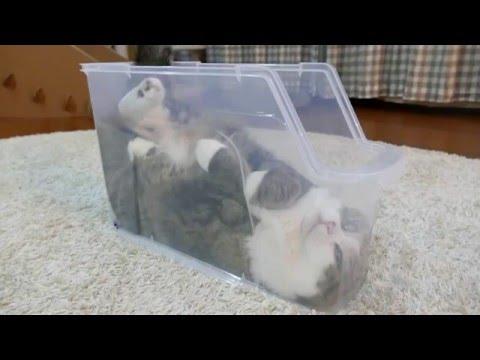 ニャホホン。猫のくつろぎ方が癒される。