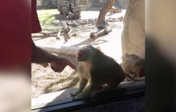 【ナイスリアクション!】お猿さんに手品を見せたらこうなる!w